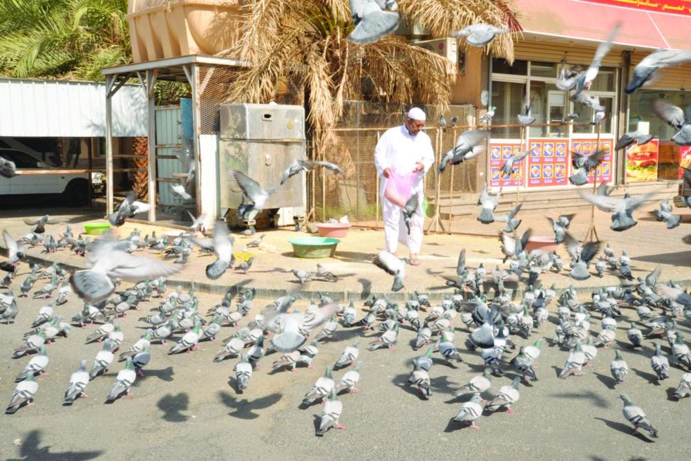 أحد البائعين يقوم بإطعام الحمام في سوق جرول. (تصوير: عمران محمد) DR_EMRAN@