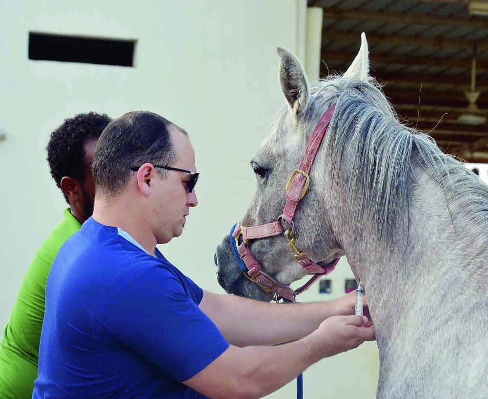 3 آلاف حصان في جدة بلا مركز طبي متخصص
