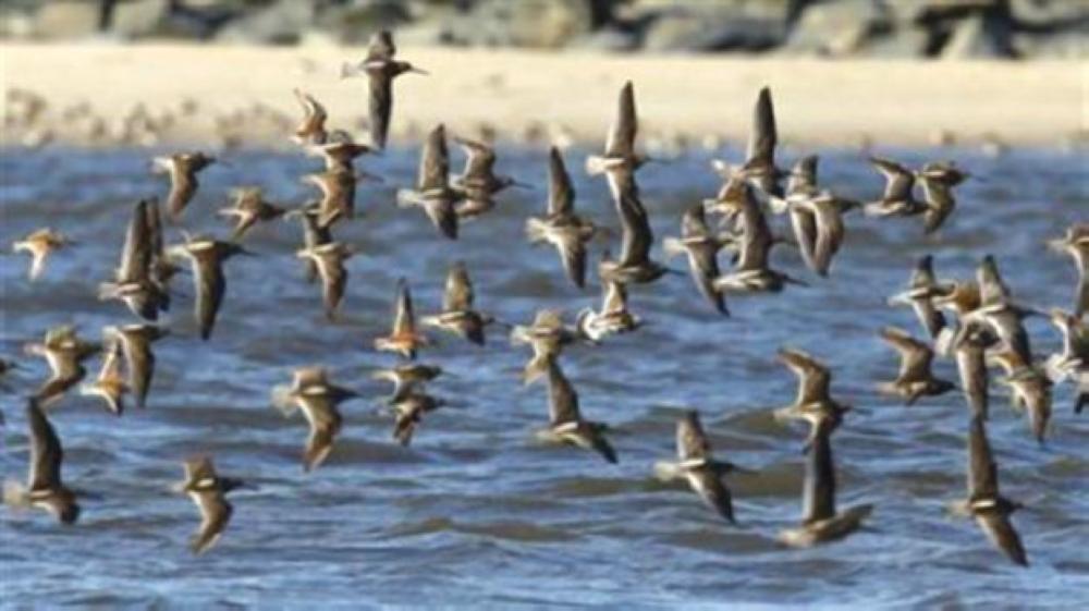 التحذير من صيد الطيور الفطرية المهاجرة والاتجار بها