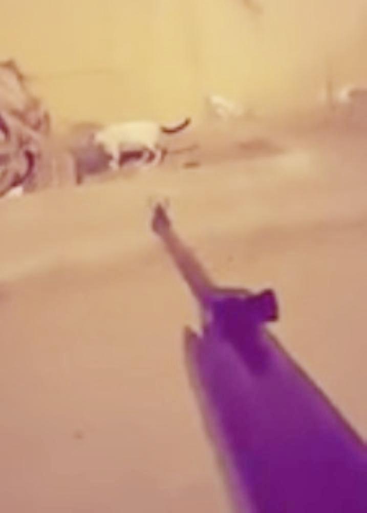 مقطع متداول عن إطلاق النار على القطط.