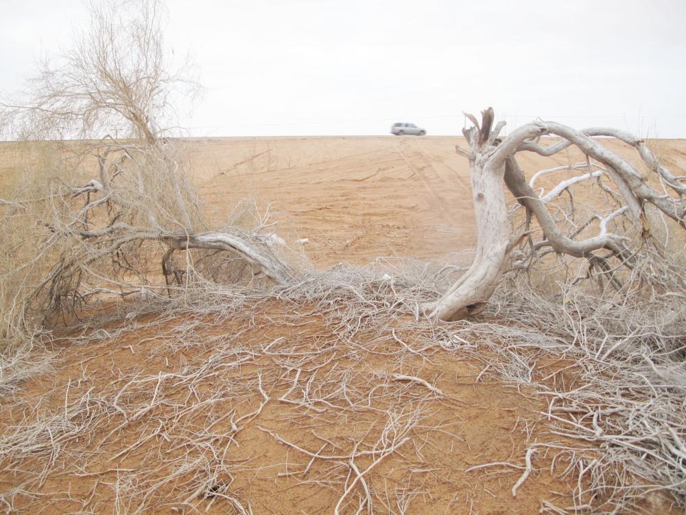 الأشجار تسقط في متنزه الغضا. (عكاظ)