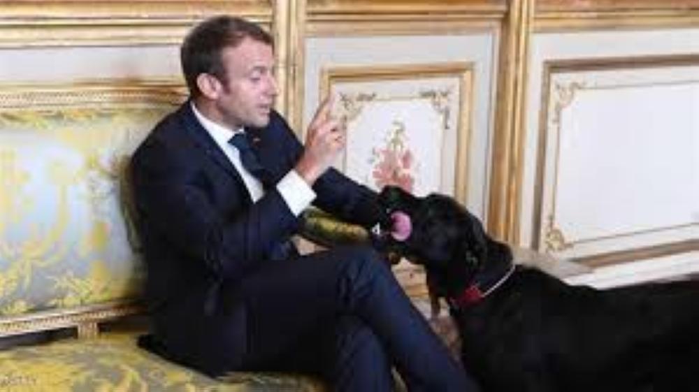كلب الرئيس الفرنسي يقضي حاجته في الإليزيه