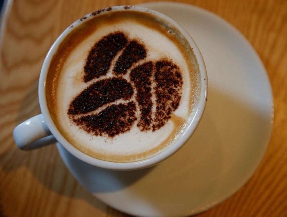 شرب القهوة يوميا يقي من الأمراض