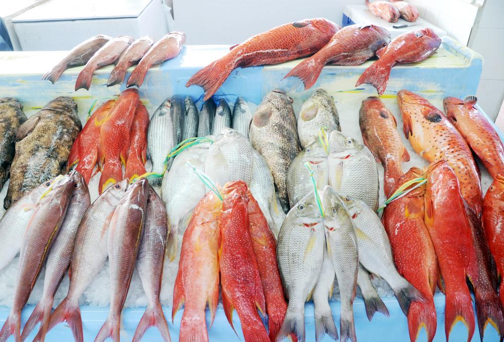 عكس الاعتقاد الشائع.. السمك المجمد كالطازج