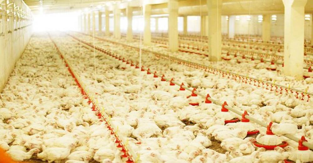 رفع حظر استيراد الطيور الحية والبيض من 4 دول