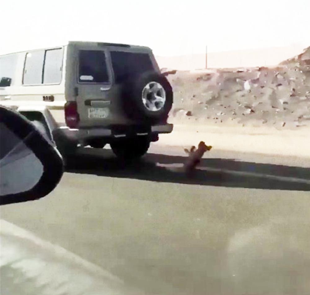 مقطع تعذيب الكلب الذي تداولته مواقع التواصل الاجتماعي.