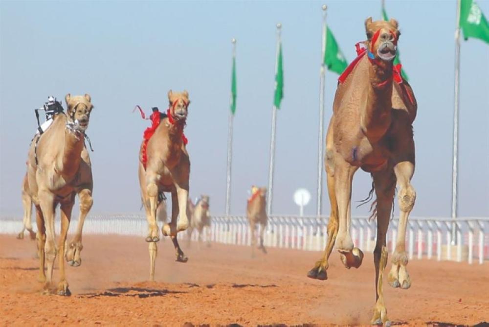 «اتحاد الهجن»: إطلاق مسابقة كأس خادم الحرمين في الرياض وكأس ولي العهد في الطائف