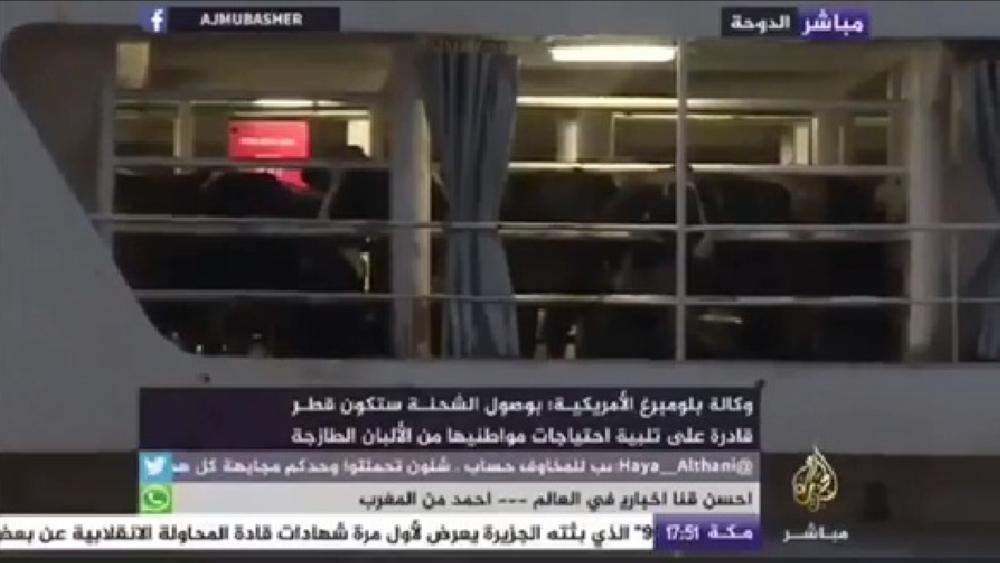 «الأبقار» يعلو شأنها في الدوحة.. استقبال وحفاوة ومواكبة من «الجزيرة»