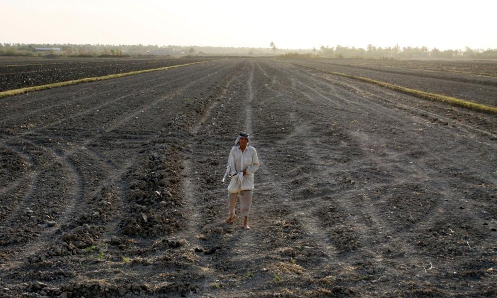 e991b7a3c أرز «العنبر» كنز زراعي عراقي ضحية الجفاف - أخبار السعودية | صحيفة عكاظ