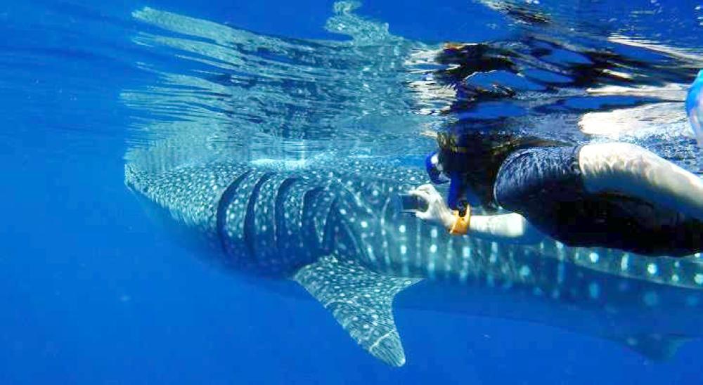 صغار الحيتان في مياه الليث.