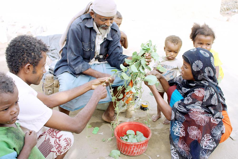 أسرة يمنية تقتات على أوراق شجر «الحلص» في منطقة عبس في حجة أمس الأول. (أ ف ب)