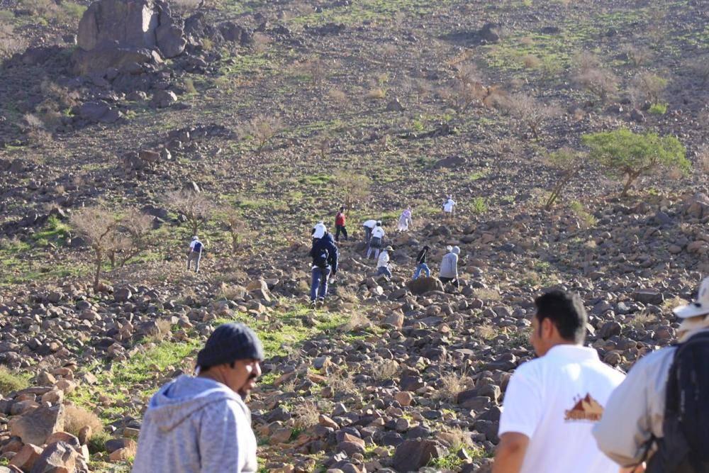 «الكامل»: 1200 مشارك يصعدون «شمنصير».. ويغرسون 50 شجرة سدر بقمة الجبل