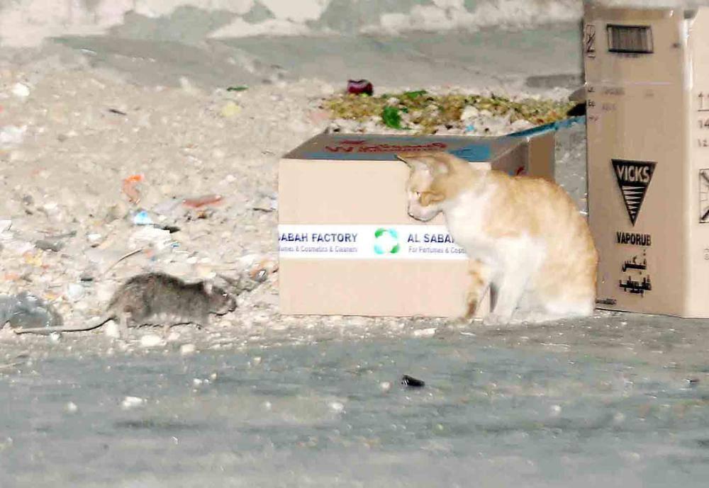 فأر وقط في أحد الأحياء الشعبية في جدة. (تصوير: عبدالسلام السلمي)