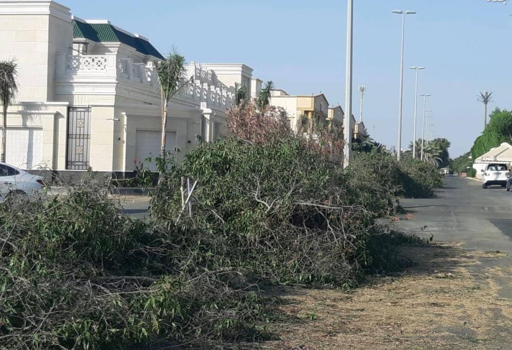 ضبط عمالة مخالفة قامت بقص الأشجار في جدة