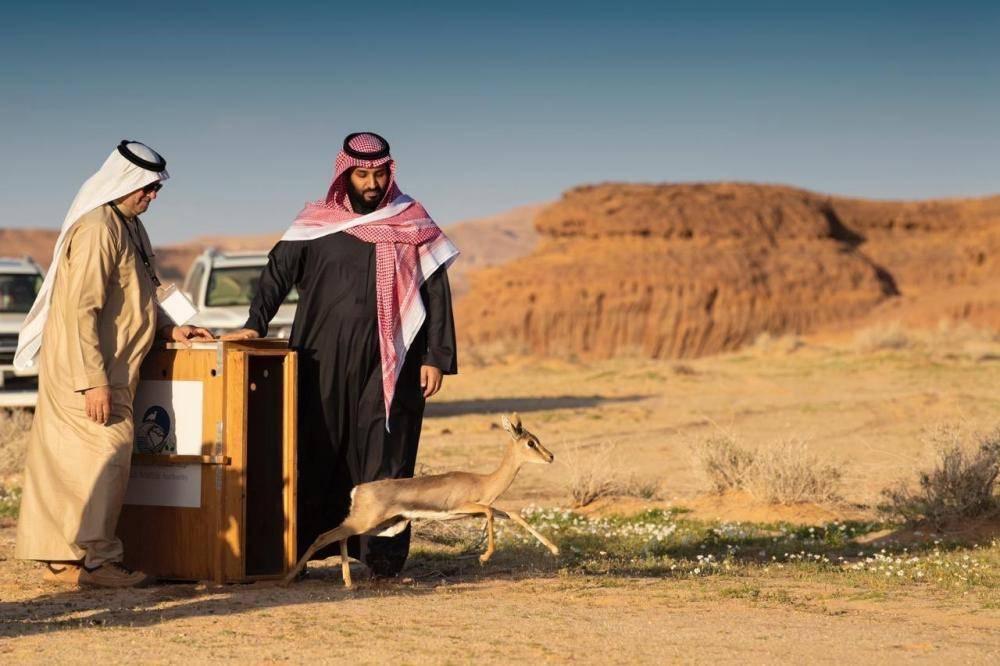 ولي العهد يطلق محمية شرعان الطبيعية في محافظة العلا