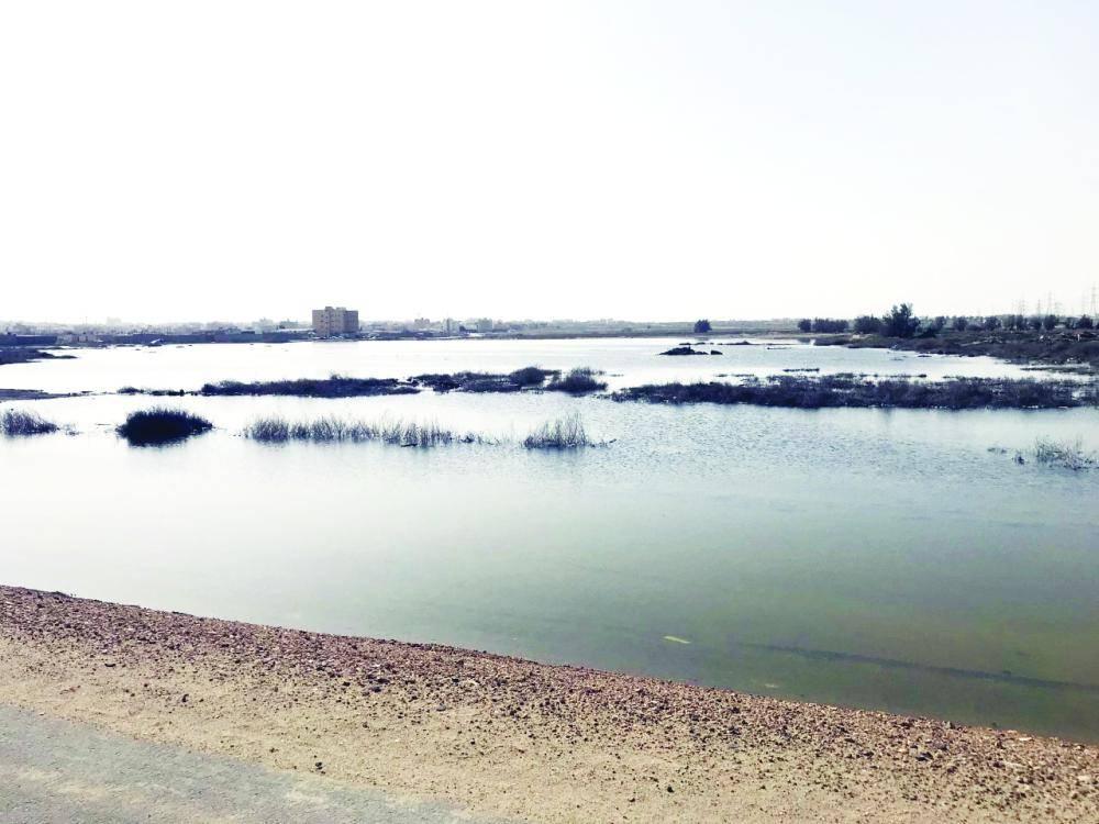 البحيرات بيئة خصبة لتكاثر الحشرات.