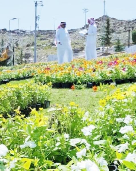 مهرجان الورد تستضيفه محافظة القرى للمرة الأولى.