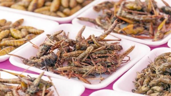 وجبة من «النمل والدود» تحمي من الإصابة بالسرطان معقول!