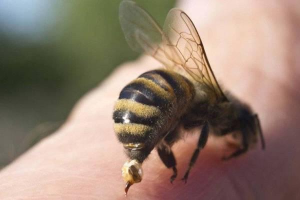 فوائد للنوم في غرفة واحدة مع النحل!