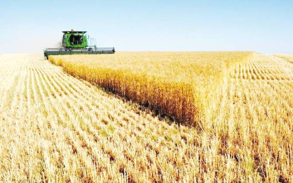 تصدير القمح الألماني إلى السعودية سيتراجع مستقبلا.