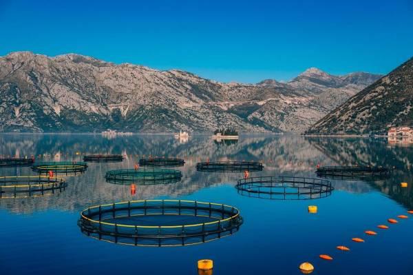 «بلومبيرغ»: جدة تحتضن أول مزرعة لتربية أسماك السلمون