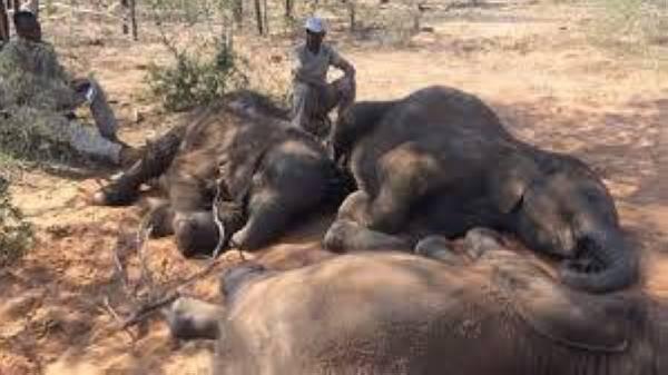 نفوق أفيال في محمية وطنية بزمبابوي