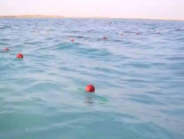 إنتاج مليون «يرقة سمك بلطي» في مركز أبحاث الثروة السمكية بجدة