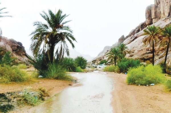 المياه في وديان حائل عقب الأمطار. «واس»