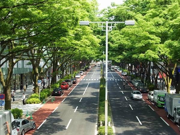 تشجير الشوارع داخل المدن