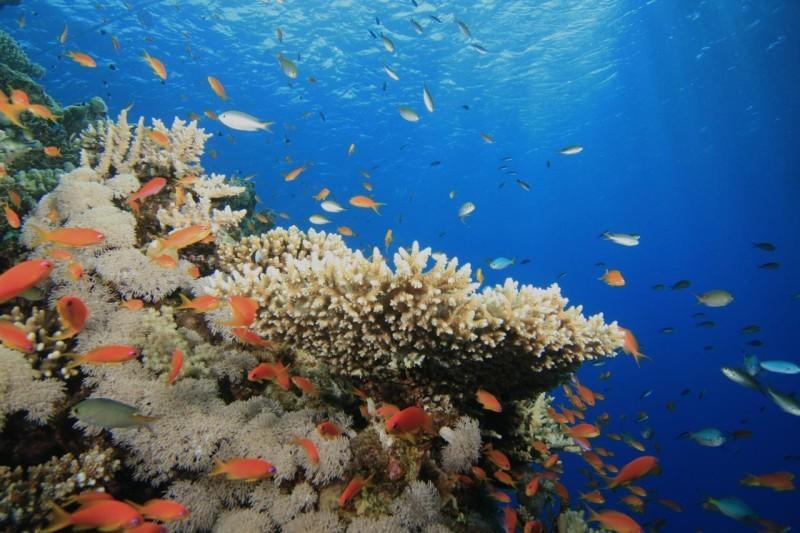 البحر الأحمر موطن لأنواع كثيرة من الكائنات البحرية، مثل الأسماك والشعاب المرجانية.