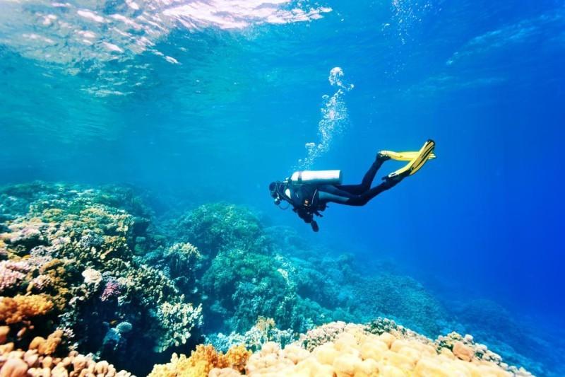 شعاب مرجانية في البحر الأحمر.