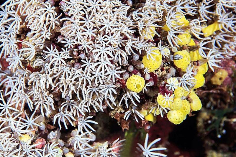 الشعاب المرجانية في البحر الأحمر تعد من أجمل الشعاب المرجانية في العالم.