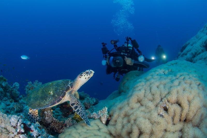 من البيئة البحرية لأملج.
