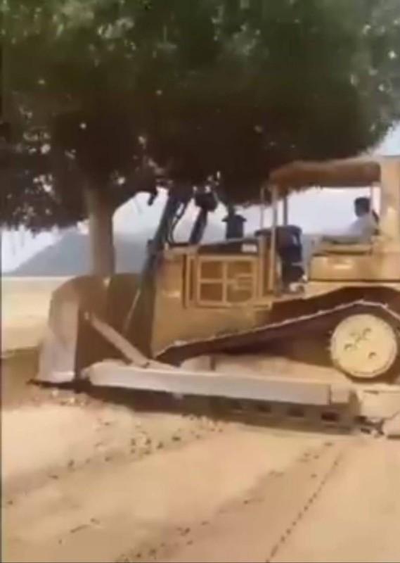 معدة آلية تقطع الشجرة المعمرة. (متداولة)