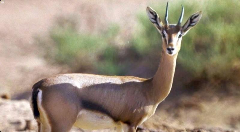 الهيئة السعودية للسياحة تطلق باقات جديدة لزيارة ثلاث محميات طبيعية خلال موسم شتاء السعودية.