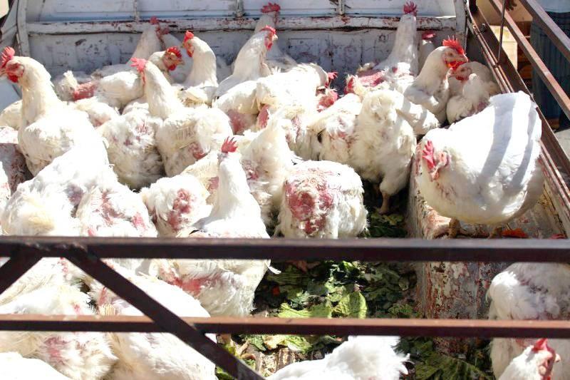 دجاج يباع في السوق.