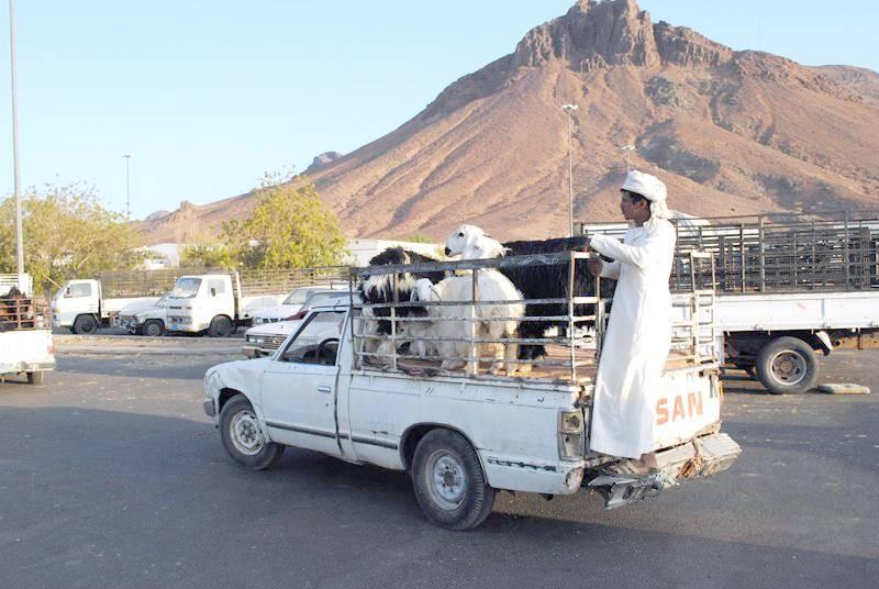 السوق شهد إقبالاً واسعاً رغم ارتفاع أسعار الماشية.