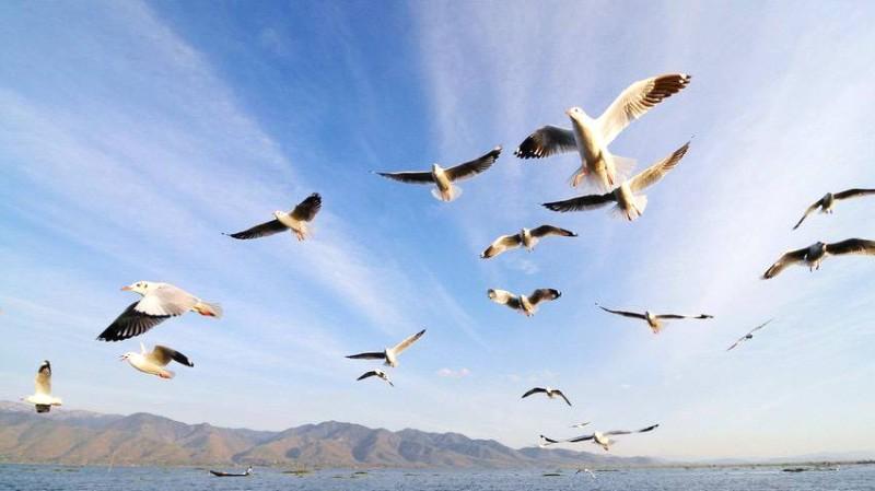 سواحل المملكة موطن آمن للطيور المهاجرة لوجود البيئات المتنوعة المناسبة لها.