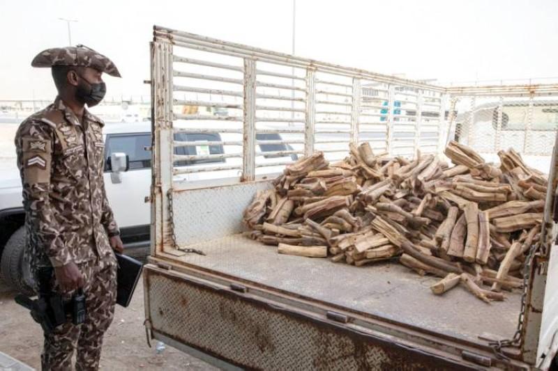 قوات الأمن البيئي تواصل تكثيف حملاتها ضد الاحتطاب الجائر. (واس)