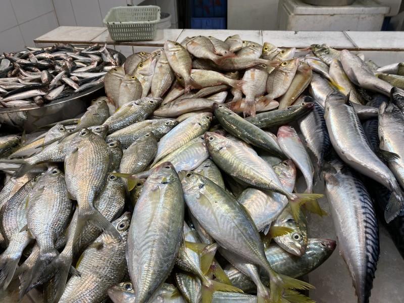 مجموعة من الأسماك معروضة للبيع في سوق الدمام المركزي. (تصوير: محمد الشهراني)