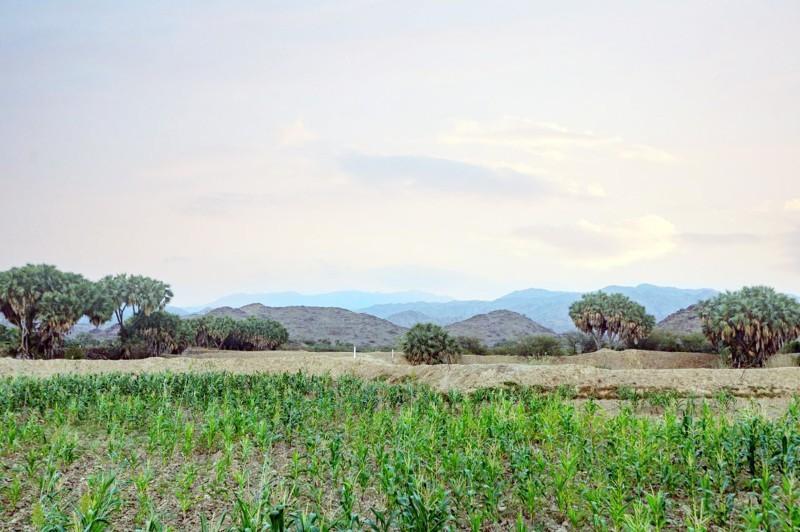 الصور خاصة لـ«عكاظ» من وزارة البيئة والمياه والزراعة.
