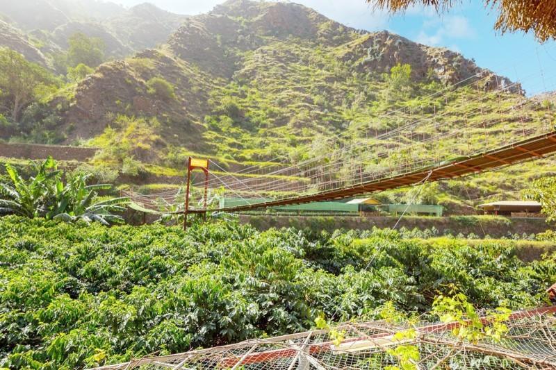 يأتي برنامج «ريف» لتحسين القطاع الريفي الزراعي والمساهمة في رفع مستوى معيشة الأسر الريفية.  (عكاظ)