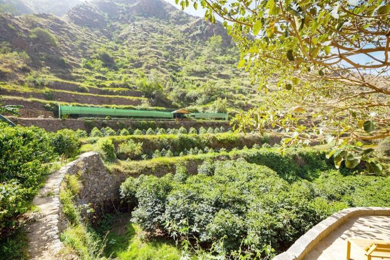 الصور خاصة لـ«عكاظ» من وزارة البيئة والمياه والزراعة
