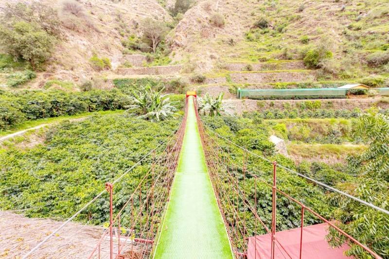 يستهدف ريف دعم عدد من القطاعات الواعدة للمنتجين الزراعيين.
