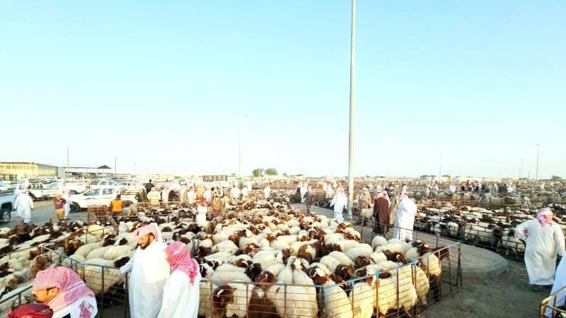 سوق الماشية بحفر الباطن أكبر سوق في الخليج. (تصوير: المحرر)