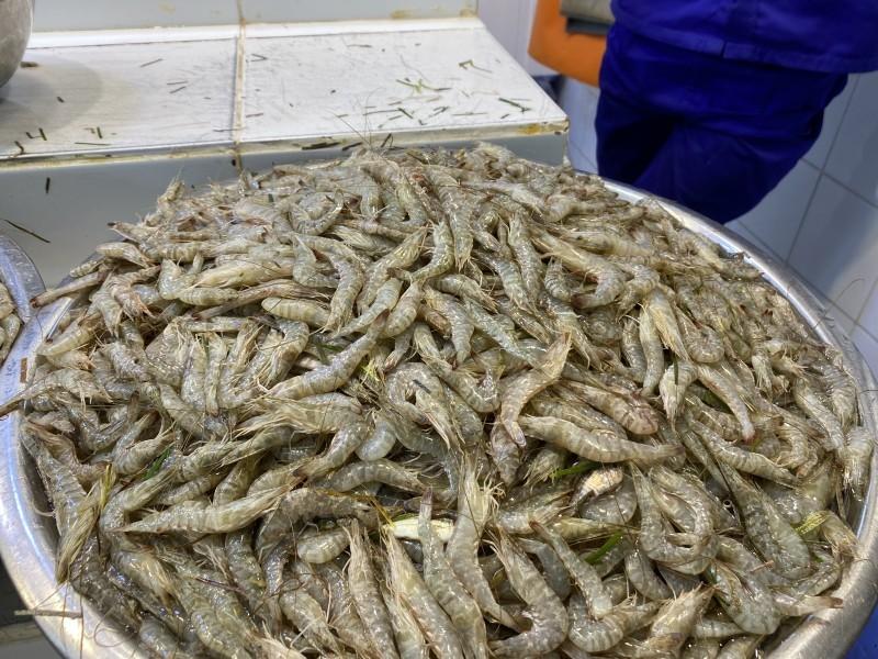 طلائع الروبيان في سوق الدمام المركزي للأسماك أمس (الأحد). (تصوير: محمد الشهراني)
