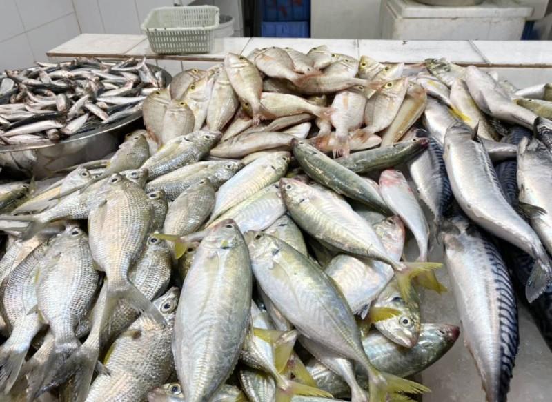 أسماك معروضة في سوق الدمام المركزي أمس (الاثنين). (تصوير: المحرر)
